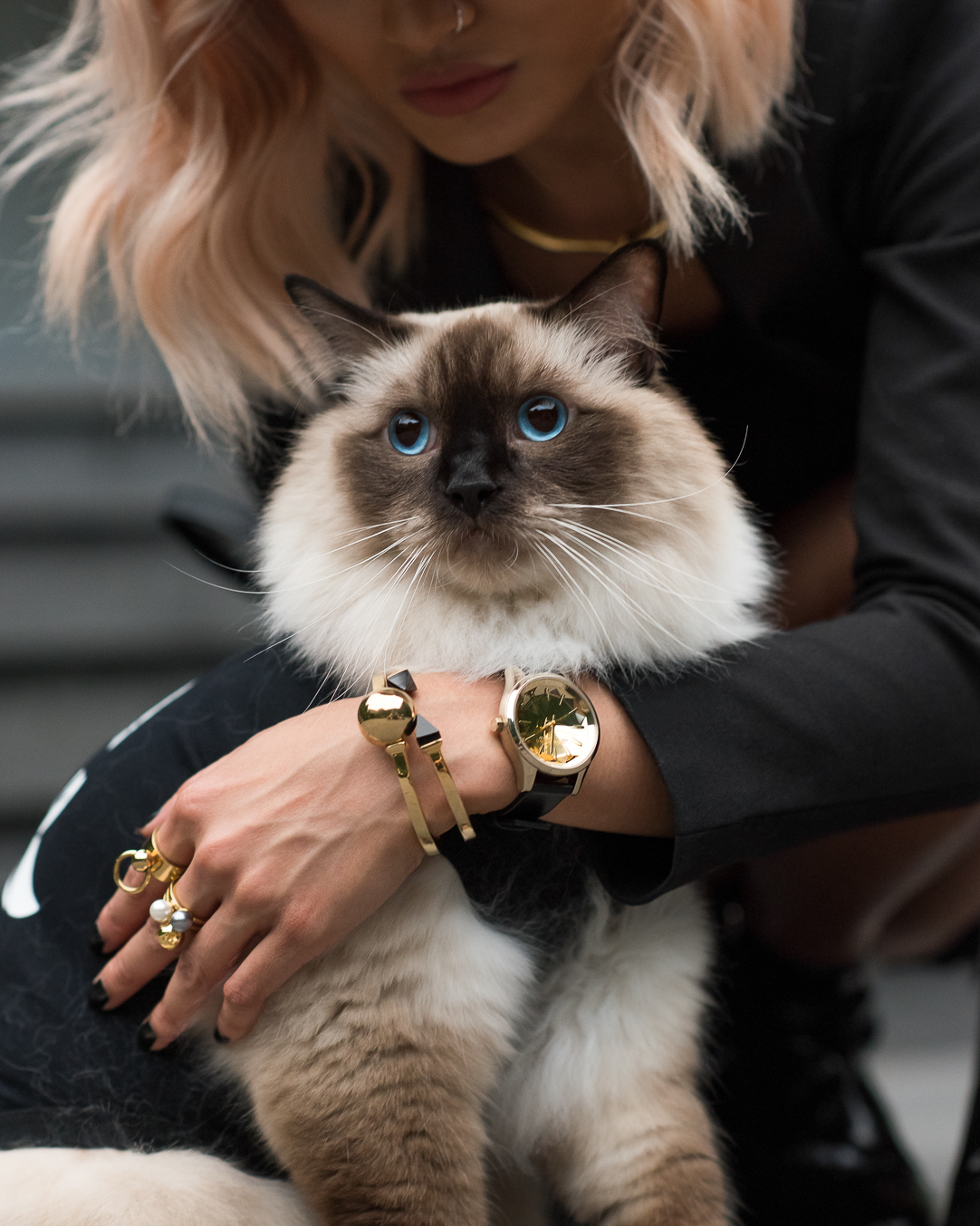 Micah-Gianneli-Karl-Lagerfeld-Choupette-Cat-Feline-Fashion-Editorial-Campaign-Ragdoll-Cat